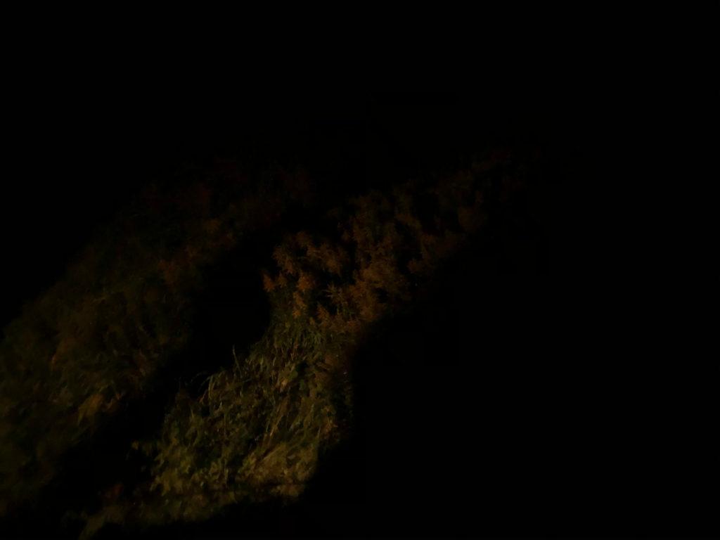 iPhone8で暗闇を撮影