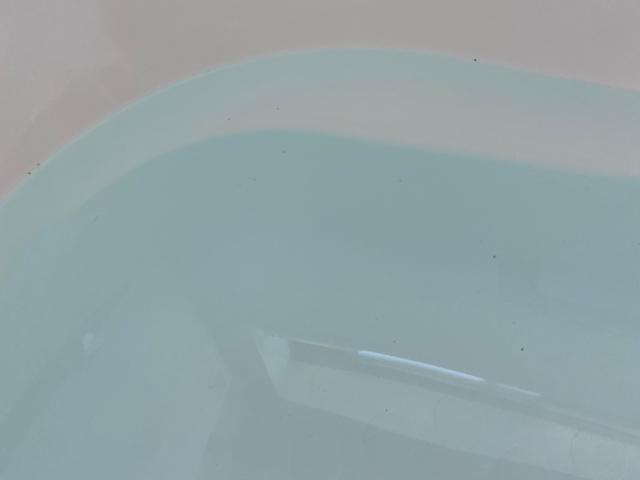 浴槽に浮かぶ黒い粒
