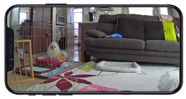 ネットワークカメラの映像をスマホで確認