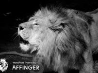 AFFINGER画像