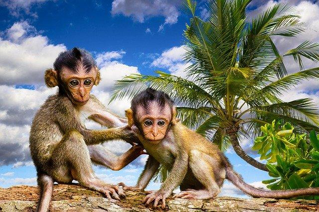 南国に暮らすお猿さん